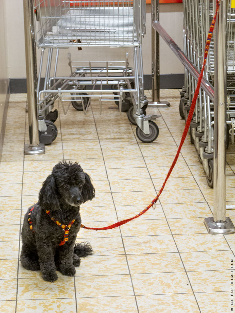 287-dog-supermarket-frankfurt